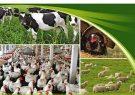اجباری شدن بیمه انواع دام، طیور، آبزیان و زنبور عسل در شهرستان انار