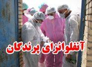 اطلاعیه دامپزشکی انار به مرغداران شهرستان در خصوص بیماری آنفلوانزای فوق حاد پرندگان