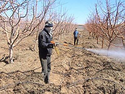 اطلاعیه جهاد کشاورزی شهرستان انار در خصوص روغن پاشی در باغات پسته
