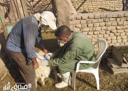 اجرای طرح واکسیناسیون دام سبک بر علیه بیماری طاعون نشخوارکنندگان کوچک در شهرستان انار