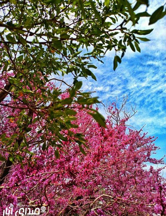 تصاویر زیبای بهاری از دریچه دوربین عکاسان صدای انار(سری اول)