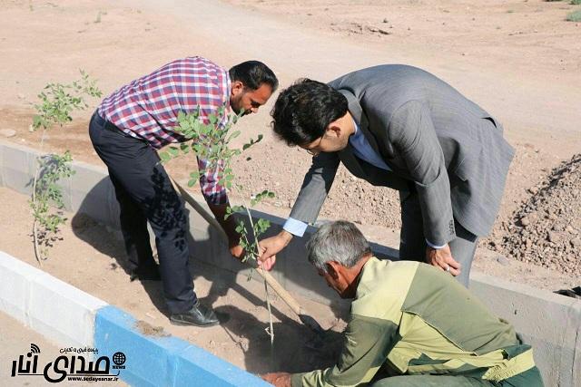 گزارش تصویری درختکاری بلوار سردار صابری در انار با همکاری اهالی محله
