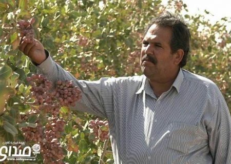 غلامرضا جدیدی اهل شهرستان انار،کشاورز نمونه پسته کار کشوری شد