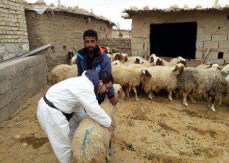 لزوم واکسیناسیون دام های سبک بر علیه بیماری آنتروتوکسمی در شهرستان انار